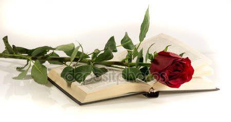 Rosa vermelha encontra-se no livro aberto — Fotografias de Stock © Leonid_Shtandel #43769857