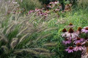 hochbeet bepflanzen stauden hochbeet: stauden und gräser -  jahr nach der pflanzung