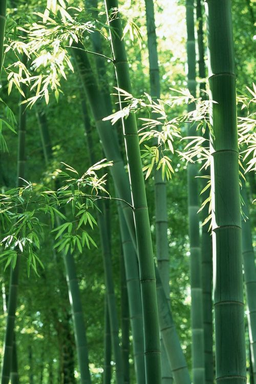 Vision Board: Bamboo Forest