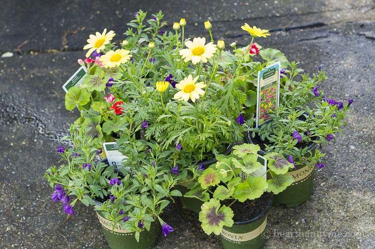 Sárga és lila virágok kiegészítő