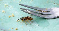 Wespen vertreiben - effektiv und schonend mit diesen Tricks