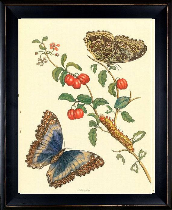 butterfly botanical print.