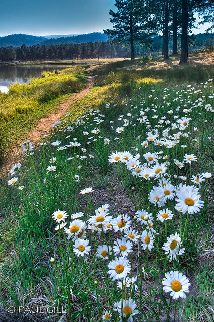 Monte Verde Lake, Angel Fire, New Mexico.....perfect wedding setting, wild daisys for bouquet.