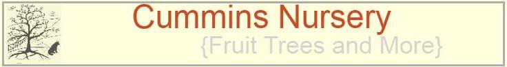 "Cummins Nursery:  large list of apple varieties, ""We can custom graft just about anything."""