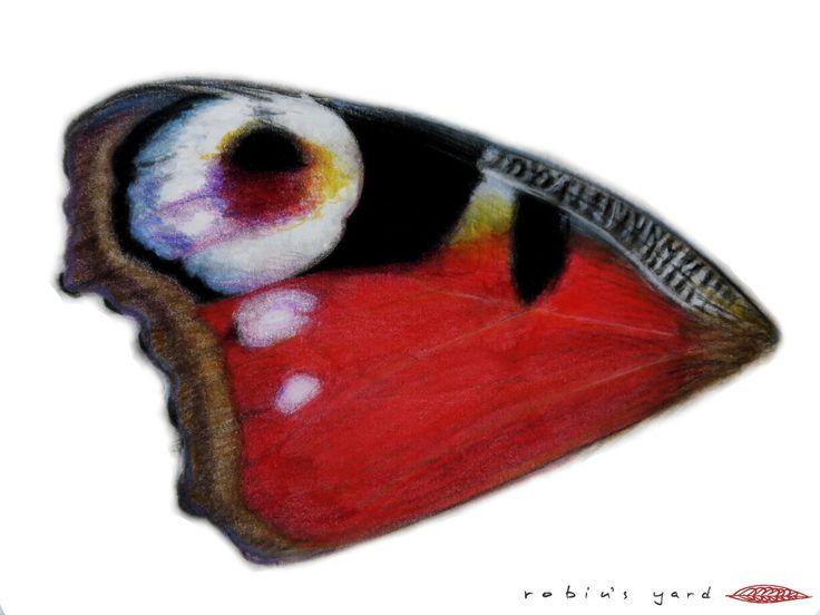 Aglais io (European Peacock) forewing upperside (watercolor and color pencils, 14,8x21cm)