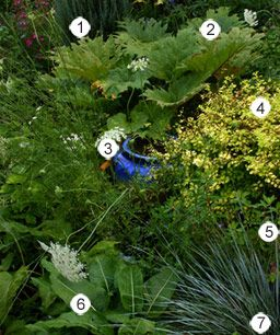 53 Best Images About Plants (Zone 6) On Pinterest | Gardens Sun And Perennial Gardens