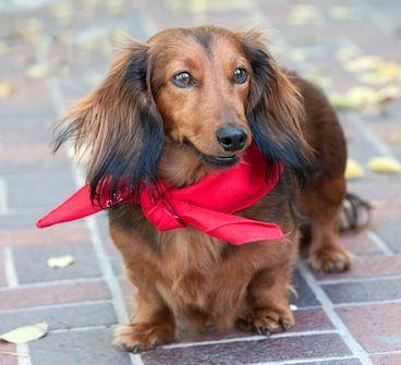 My dog Charlie. Vickie, Newbury Park, CA. 5/31/13.: Parks Frank, Newburi Parks, Weenie Dogs, Ball Parks, Things Dogs, Dogs Stands, Dogs Editing, Happy Dogs, Dogs Charli