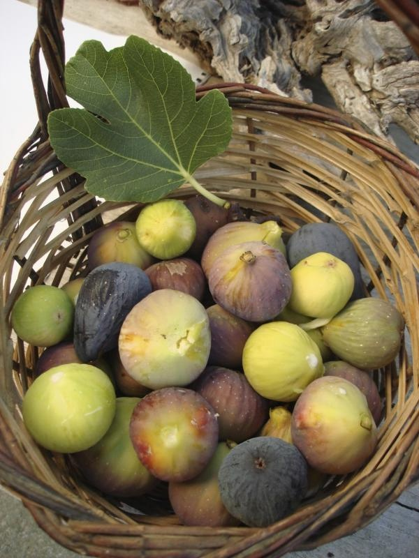 Figs in a baskest from Kea (Tzia) island, Cyclades, Greece. - Selected by www.oiamansion.com