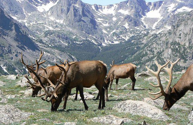 Trailridge Road, Rocky Mountain National Park, Colorado