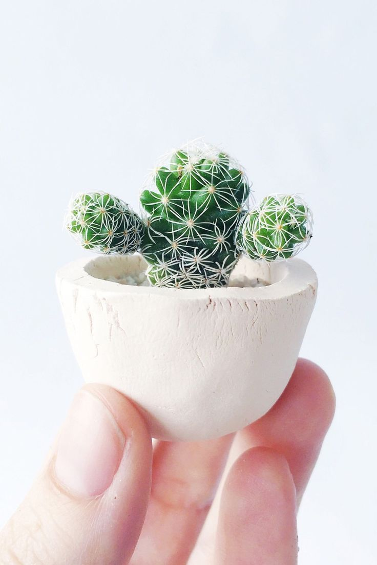 Mini Cactus And Mini Planter Lino Mini Cactus Kit Handmade Mini Cactus Handmade Ceramic Planters Cactus Plants