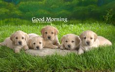 Good Morning Cute Dog Puppy Images