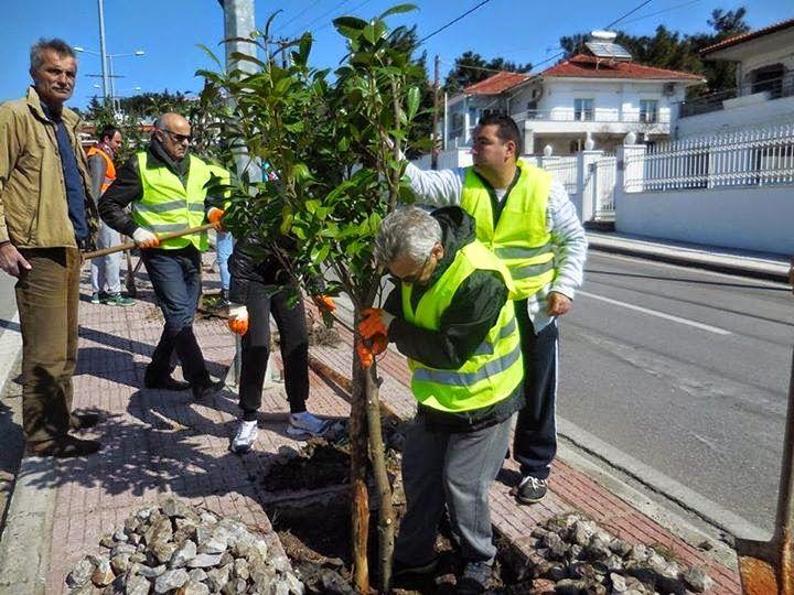 """e-Pontos.gr: Τα Παραδοσιακά δέντρα του Πόντου """"Δαφνοκέρασα"""", σε..."""