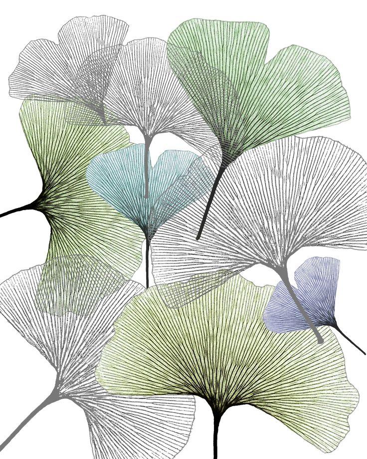 skeleton ginko leaves