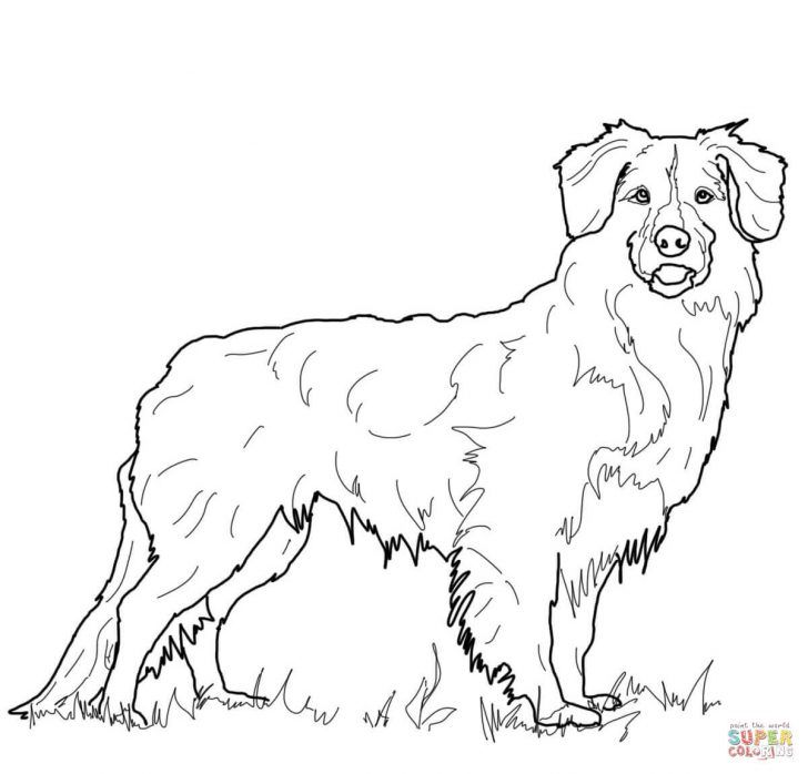 Golden Retriever Coloring Page Golden Retriever Coloring Page Free Printable Coloring Pages Albanysinsanity Com Puppy Coloring Pages Dog Coloring Page Golden Retriever Drawing