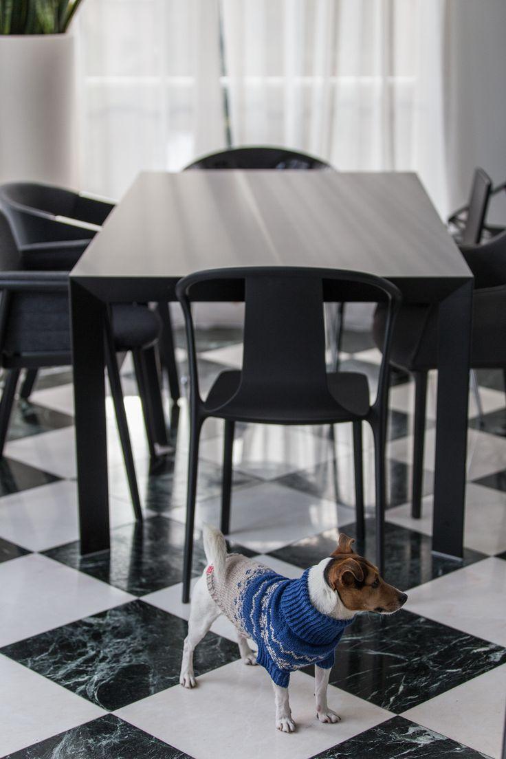 #interior #session #dog #design #photography #studio #absynt #studioabsynt