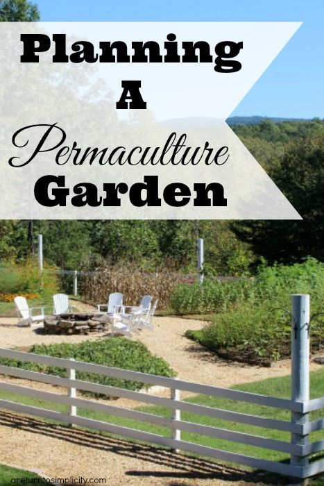 Permaculture And Food Forest Gardens Native Plant Talk: 110 Best Images About PERMACULTURE And FOOD FORESTS On