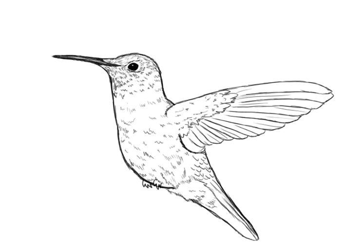 Line Art Hummingbird : Ideas about hummingbird drawing on pinterest