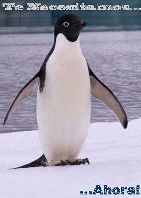Alimentación de los pingüinos | PINGUINOPEDIA