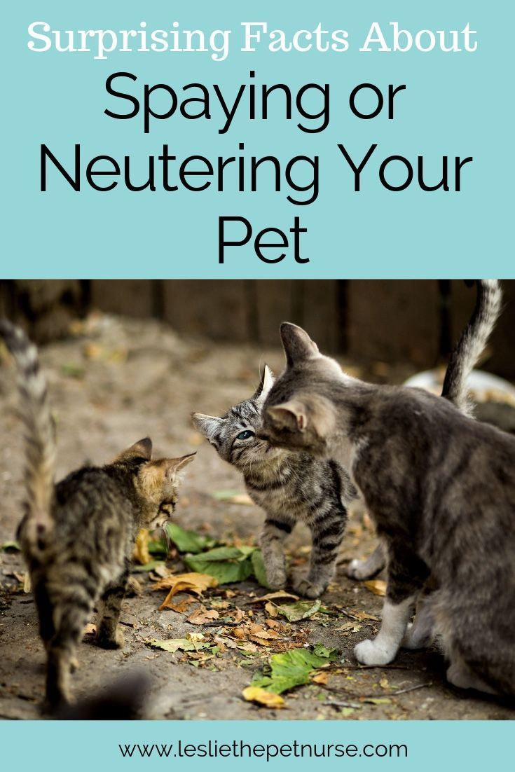 There Are So Many Benefits For Pets Pet Parents And The Community When We Choose To Spay Or Neuter Click To Read An Articl Pets Dog Spay Homeless Pets