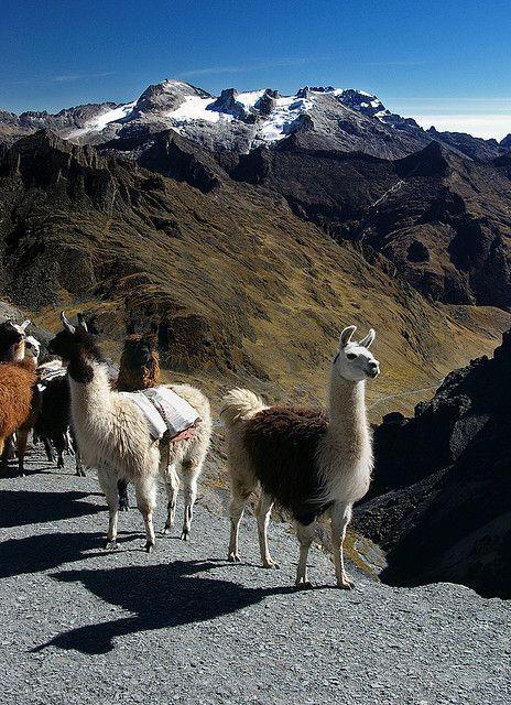 Sharing the trail, La Paz region, Bolivia (by Jessie Reeder).