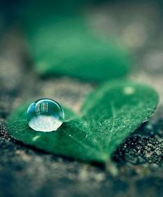 40 Macro Photography of Water Drops