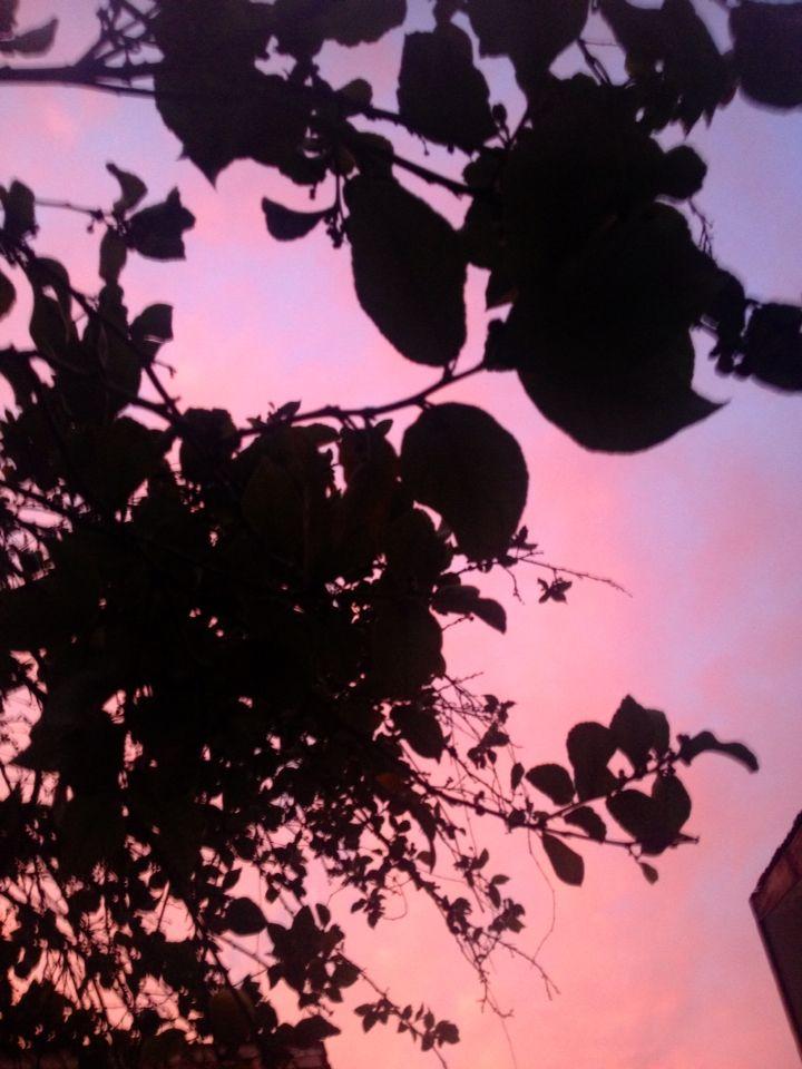 Cielo rosado