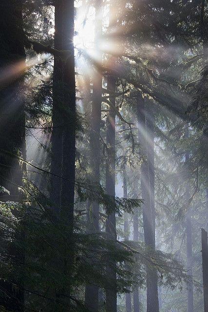 Sun emerging from fog, Olympic National Park |