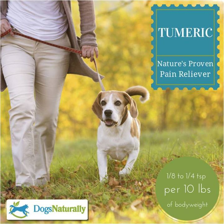 Turmeric: Nature's Proven Pain Reliever/Anti-Inflammatory. It's not just for humans but for doggies, too! An exciting new study shows that turmeric can be as effective as pharmaceutical drugs in relieving arthritis and joint pain or stiffness. Have you tried turmeric for your dog?