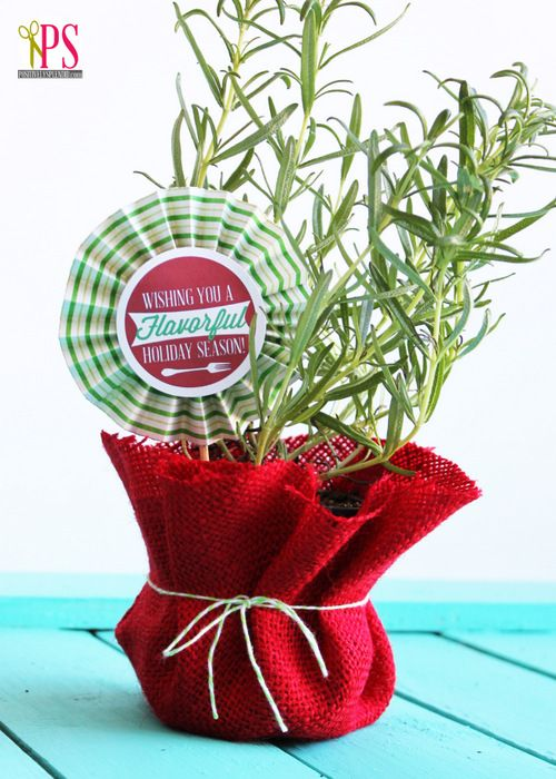 Spruce up a tiny potted herb for a quick and easy gift. Amy from Positively Splendid demonstrates a nice way to wrap and deliver this gift. || @splendidamy