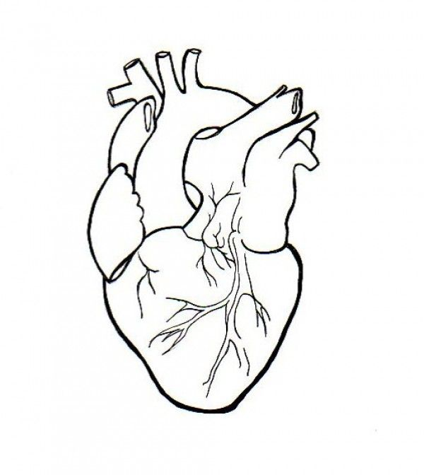 Heart Tattoo Line Drawing : Best images about doodle it down on pinterest oil