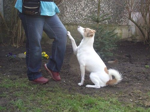 Hundetrick: Tipp & Tapp