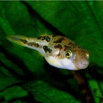 Aquatics to your Door : UK's Largest Online Tropical Fish Store