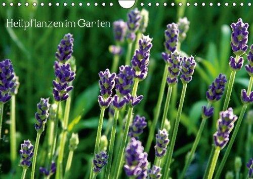 Heilpflanzen im Garten (Wandkalender 2013 DIN A4 quer) von Andrea Fettweis, http://www.amazon.de/dp/366003715X/ref=cm_sw_r_pi_dp_ljC7qb0QF1VY0