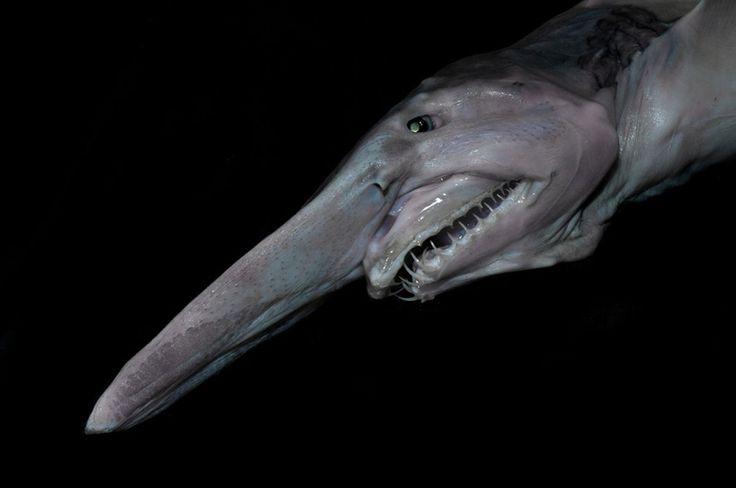 criaturas marinas5