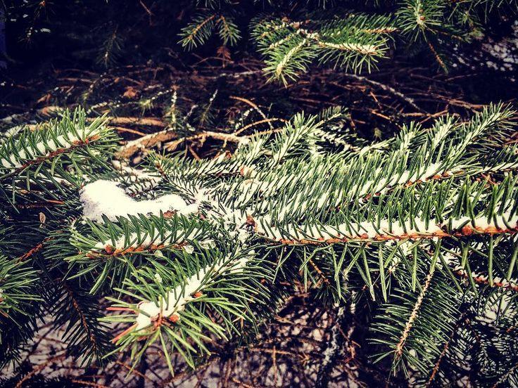 Detale #winter #choinka #zima#snow #nowahuta #instaphoto