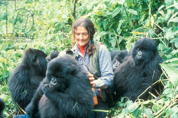 Dian Fossey (photo)