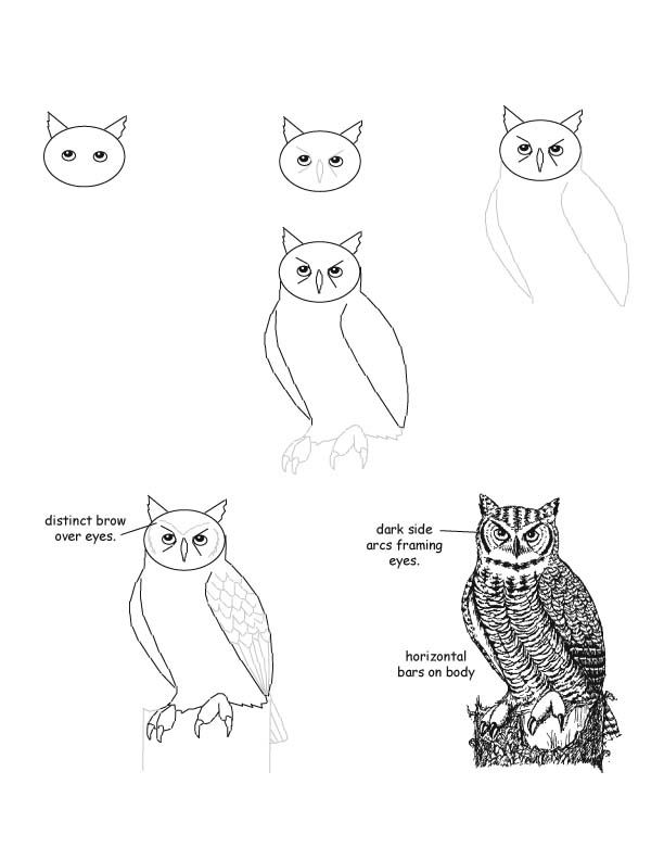 251 best art images on pinterest art drawings art for Steps to draw an owl