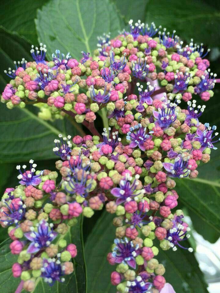 20 migliori immagini ciclamini su pinterest fantasia - Giardinieri in affitto consigli ...