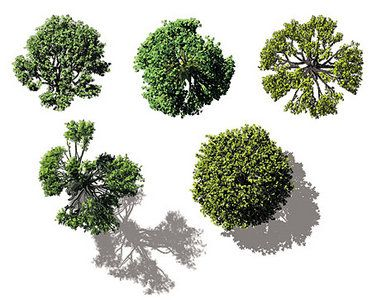 architectural trees - Google Search
