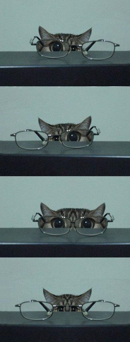 kitty & glasses