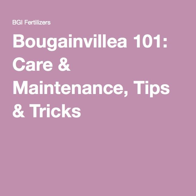 Bougainvillea 101: Care & Maintenance, Tips & Tricks