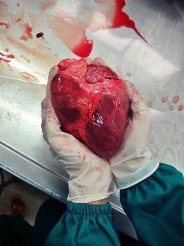 The human heart ~juljmt~