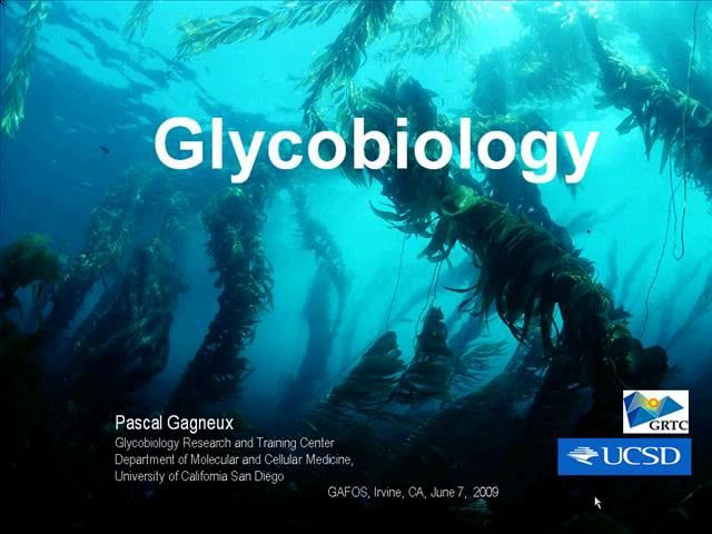 "Glycobiology – The Life Science of Glycans Pascal Gagneux, University of California, San Diego  Cellular life forms spanning the three domains of Bacteria, Archaea, and Eukarya have cells covered with a glycocalyx, a ""sugar shell"". These shells consist of a complex layer of glycans, oligosaccharide chains attached to glycoproteins, glycolipids or proteoglycans. Microorganisms and plants also produce long polysaccharides often combined with complex lipids to form capsules and/or cell walls…"