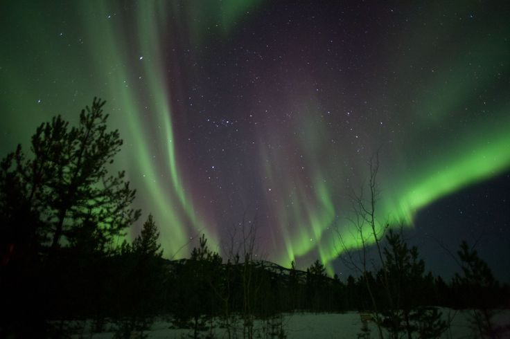 Northern lights Yukon Territory near Whitehorse