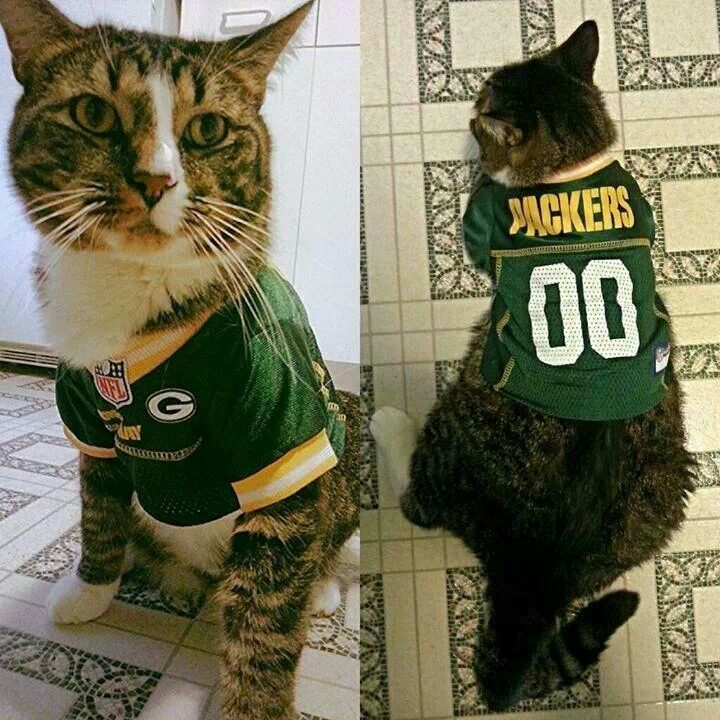 Every Cat Needs This, Honestly Perfect. GO PACK GO! Omg I