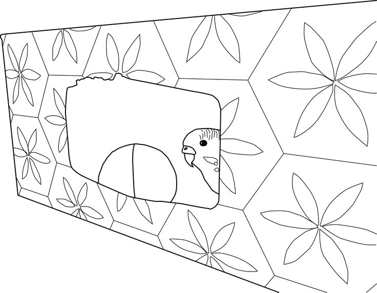 budgie coloring pages - photo#20