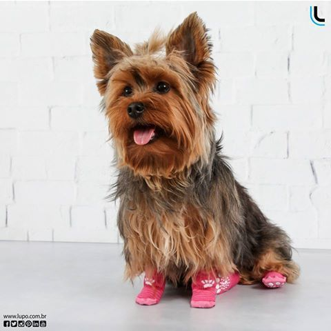 13 best lulupo pet socks images on pinterest athletic dresses lulupo proteo e segurana para o seu pet petsocks lulupo lupolove fandeluxe Image collections