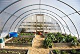 Greenhouse Film 4 year 6mil Clear 25' x 40'