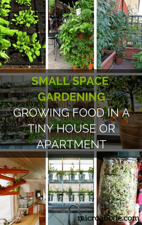 small space gardening growing food in a tiny house or apartment