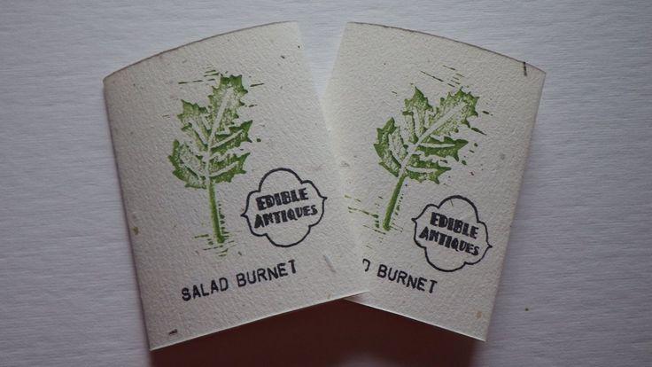 """""""Salad Burnet"""" Seeds"""